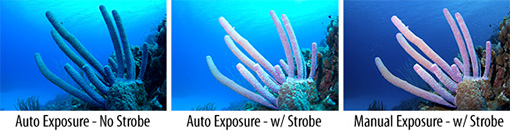 Auto vs. Manual underwater camera exposure