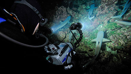 Underwater video light review high shooting at night