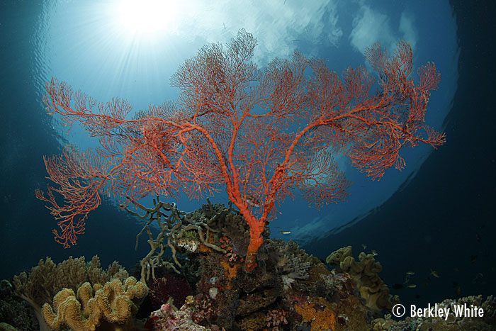 Wakatobi is an outstanding location for photography and video
