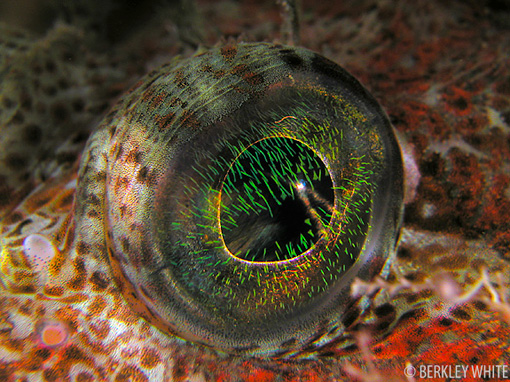Best underwater point & shoot cameras - macro fish eye image
