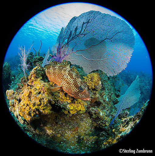 Little Cayman shot with <a href='http://www.backscatter.com/sku/gt-95-45-200.5.lasso' class='standard'>Gates VL24</a> video lights by Sterling Zumbrunn